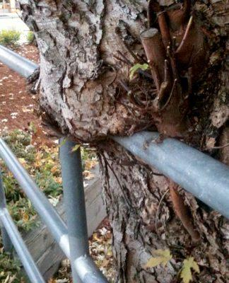 Tree Metal Rail